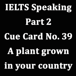 IELTS Speaking Part 2: Topic card on 'A plant grown in your country' with best ideas, notes and model answer