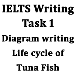 IELTS AC Writing Task 1: diagram, life cycle of tuna fish, with detailed explanations and best model answer
